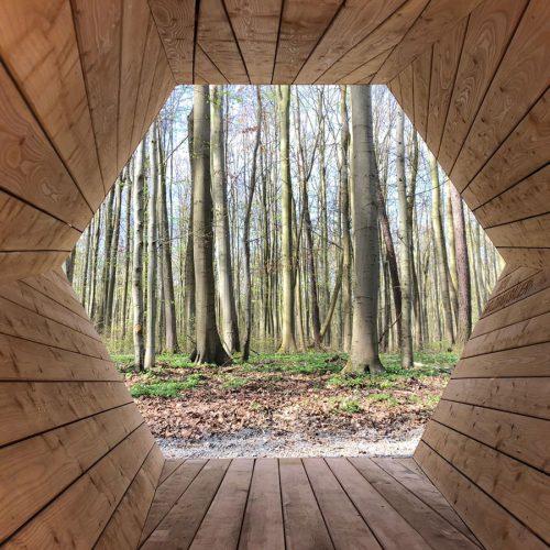 holzbau-sauer-dingelstaedt-wald-megafon-nationalpark-hainich-04